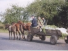 Going to Market in Zurawno, September, 2003